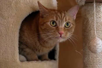 cat-4879042_640