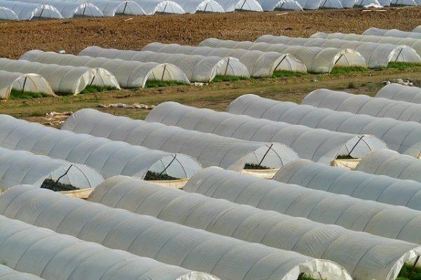 greenhouse-64394_640