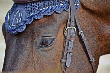 horse-2333678_640