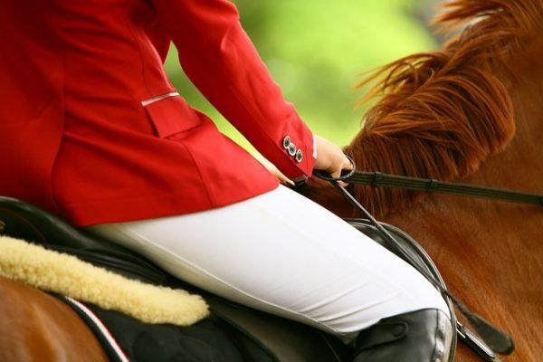 horse-3165771_640